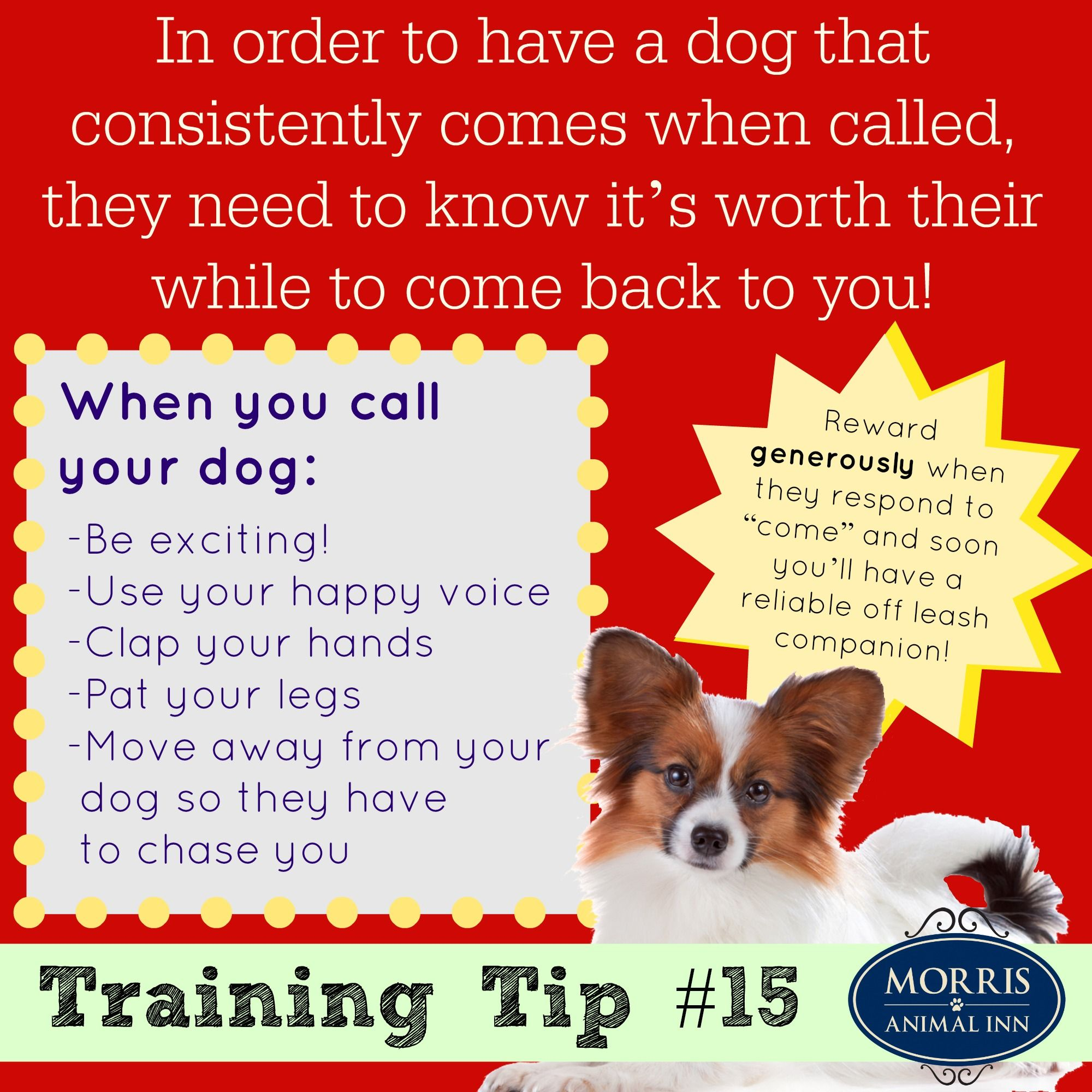 Training Tip Make It Worth It For Your Dog To Come Back To You