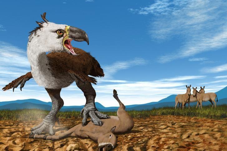 Titanis walleri - now extinct for 2 million years