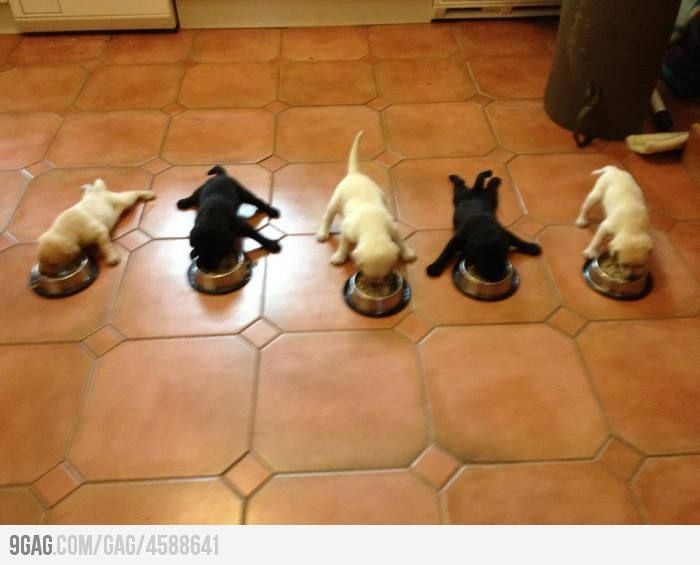 5 little puppies. LOL at number four! HAHAHAHA!