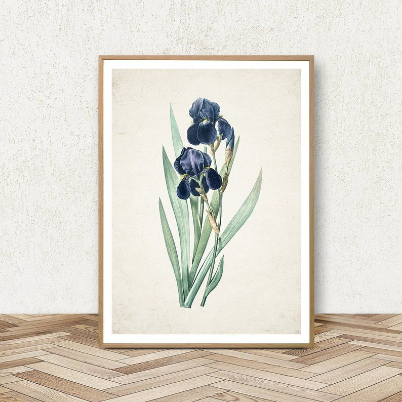 Blue Iris Flower Wall Art Set Downloadable Prints Iris Etsy