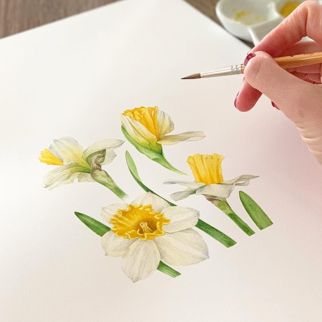 Narcissus Watercolor Illustration Watercolor Botanicalillustration Botanical Botany F Narcissus Flower Tattoos Narcissus Flower Watercolor Illustration