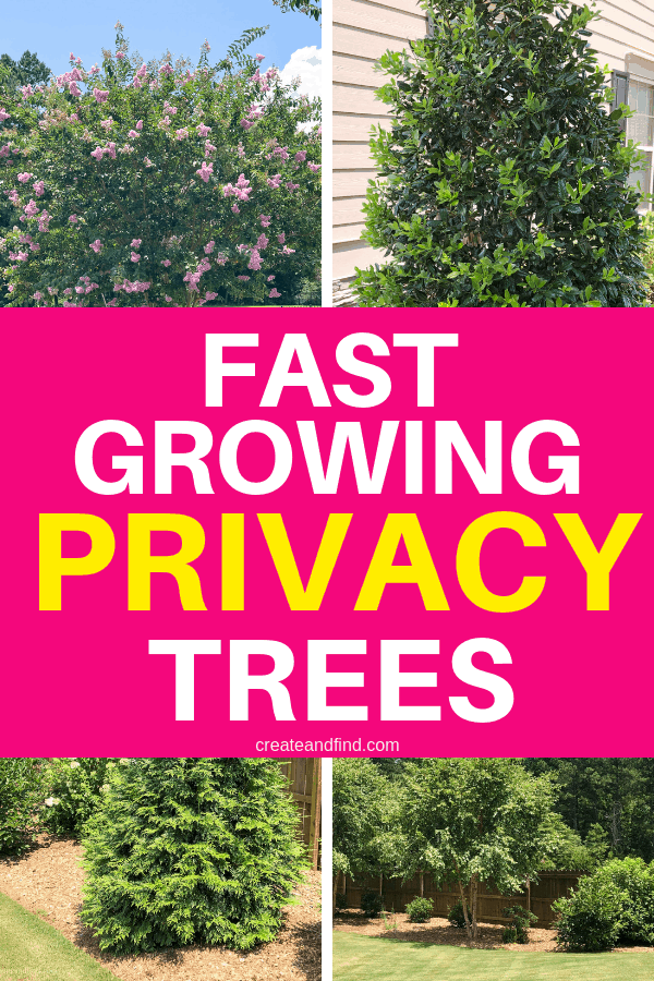 Fast Growing Privacy Trees Privacy Plants Privacy Trees Fast Growing Trees