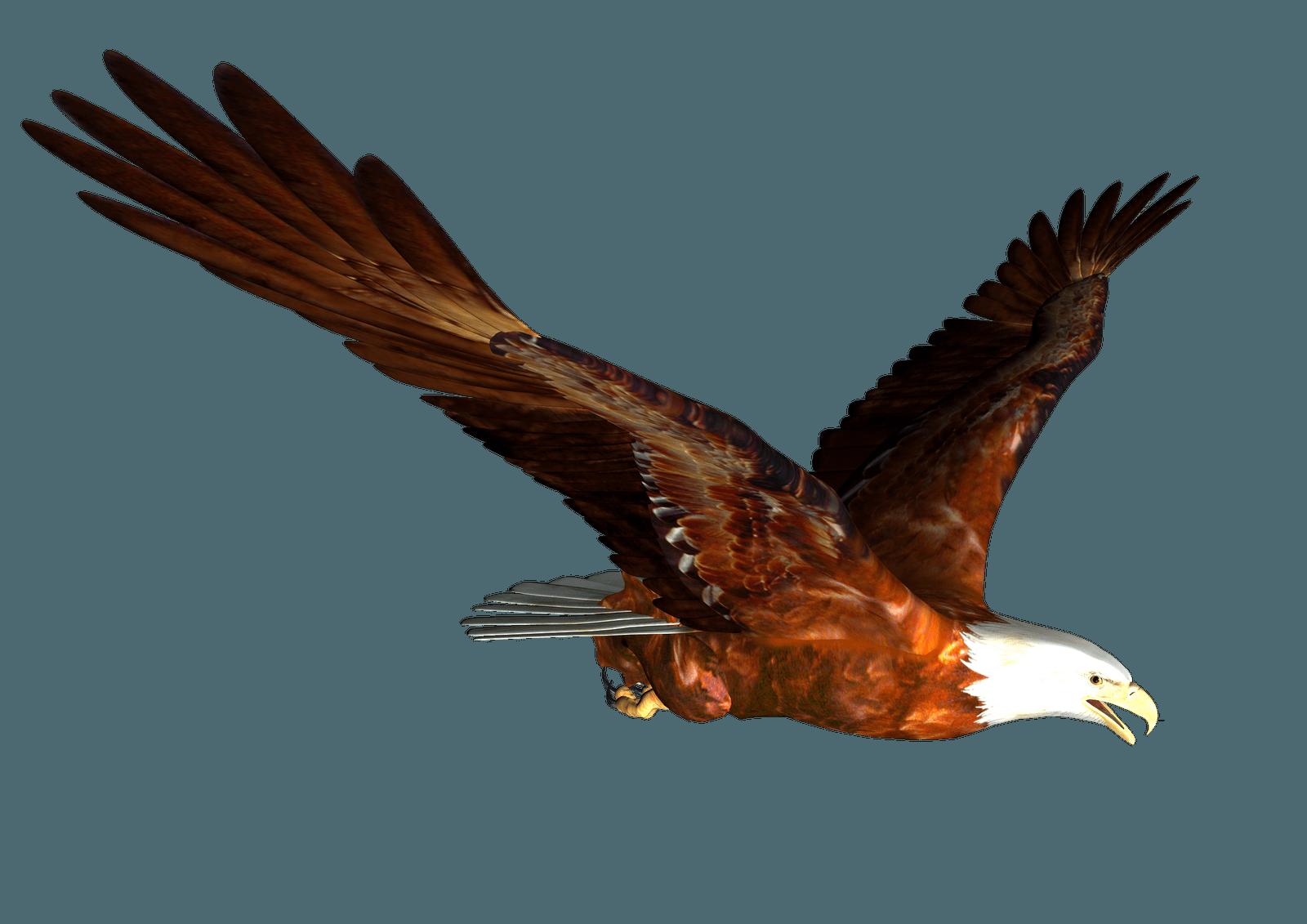 Animated Bald Eagle Flying Png Image Clip Art Pictures Bald Eagle Cartoon Clip Art