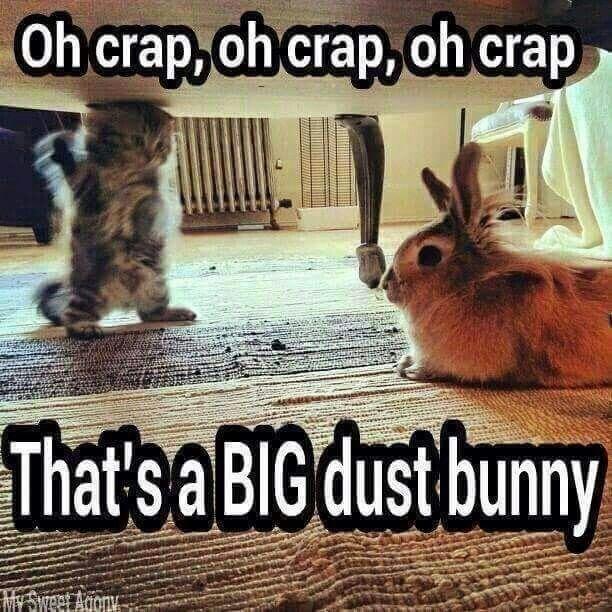 Cute animal memes clean - photo#45