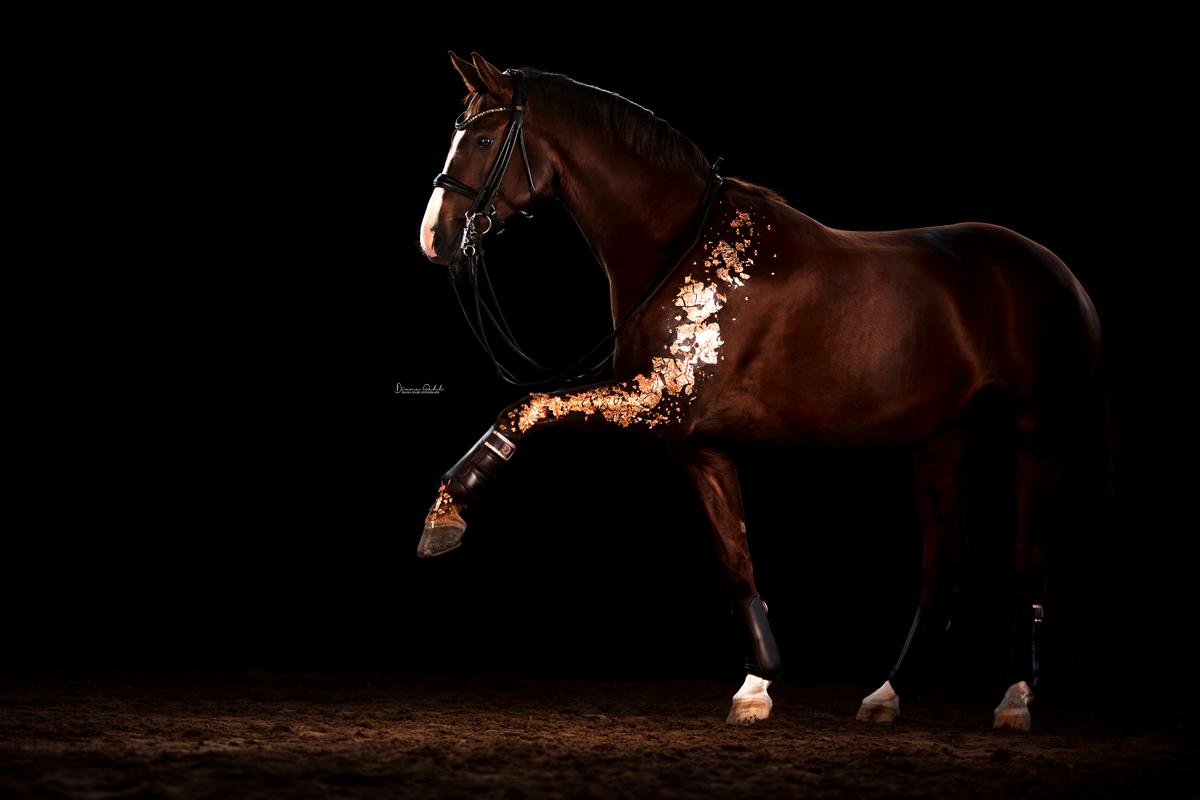 Deals Fur Pferd Und Reiter In 2020 Pferdefotos Susse Tiere Pferde