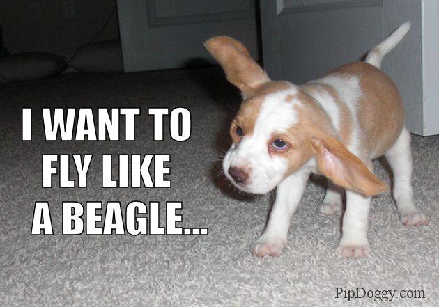 Dog Memes Beagles Beagle Puppy Beagle Puppy Best Dog Names
