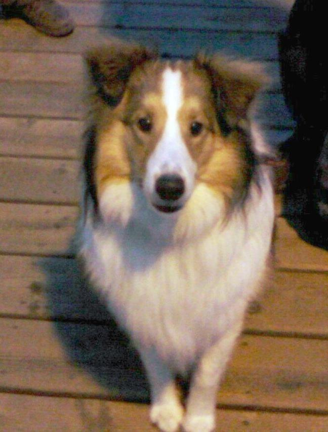 High Tech Lost Dog Dave Malkoff Ktla Com Losing A Dog