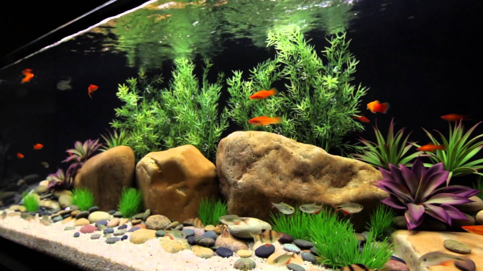 How To Setup And Maintain Freshwater Aquariums