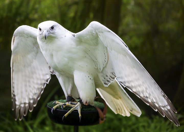 Eagle Heights is one of the largest Bird of Prey Centres ...