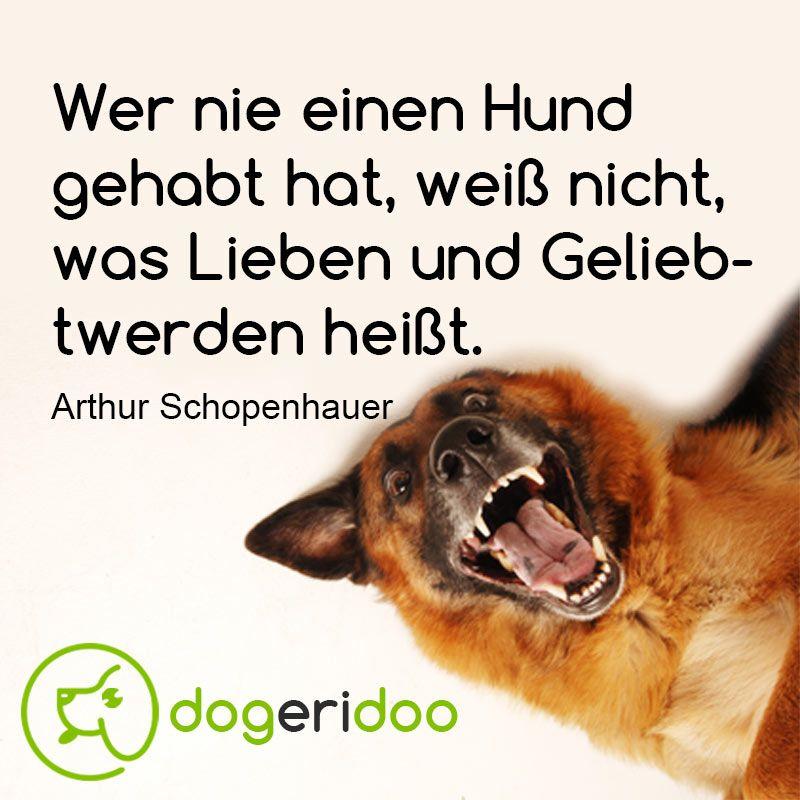 Pin von Elena Schmidt auf Hunde - Süßeste haustiere, Hunde ...