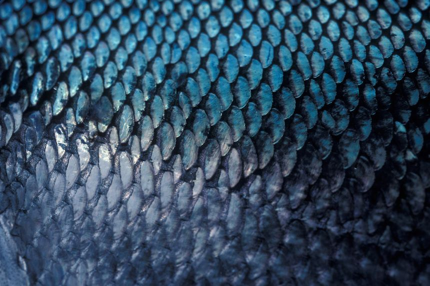 Image result for fish scales