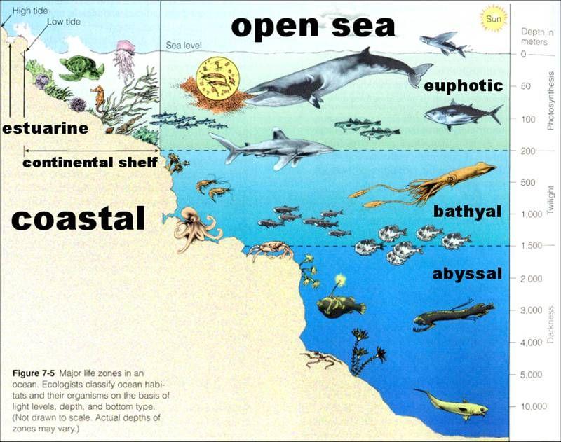 sea life worksheets – Ocean Zones Worksheet