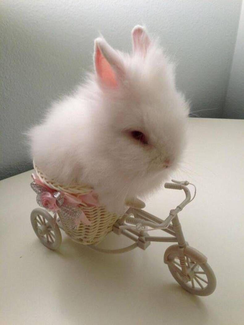 Little Tiny Bunny Bunny Riding A Bike Cute Schattige