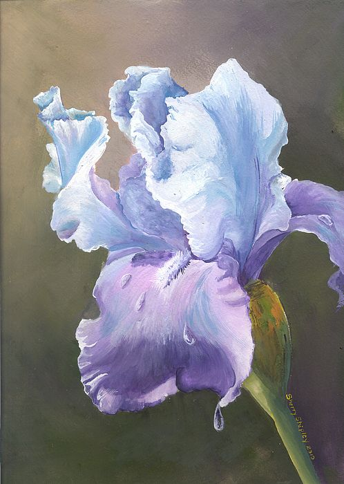 Iris Tears By Sherry Shipley Iris Painting Flower Painting Flower Artwork