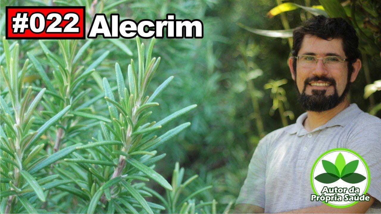 Saúde Pelas Plantas - Alecrim [anti-inflamatório, antidepressivo, digest...