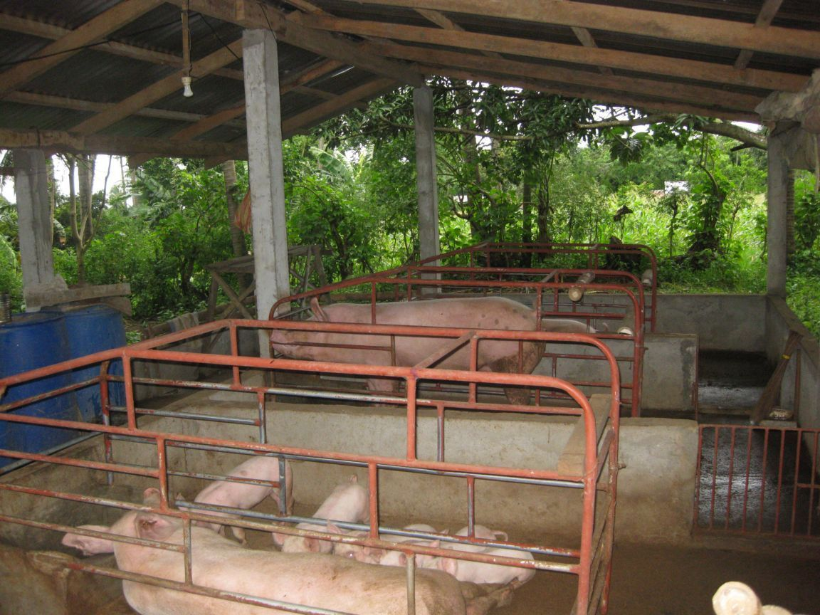 piggery - Google Search | pig sty | Outdoor structures ...