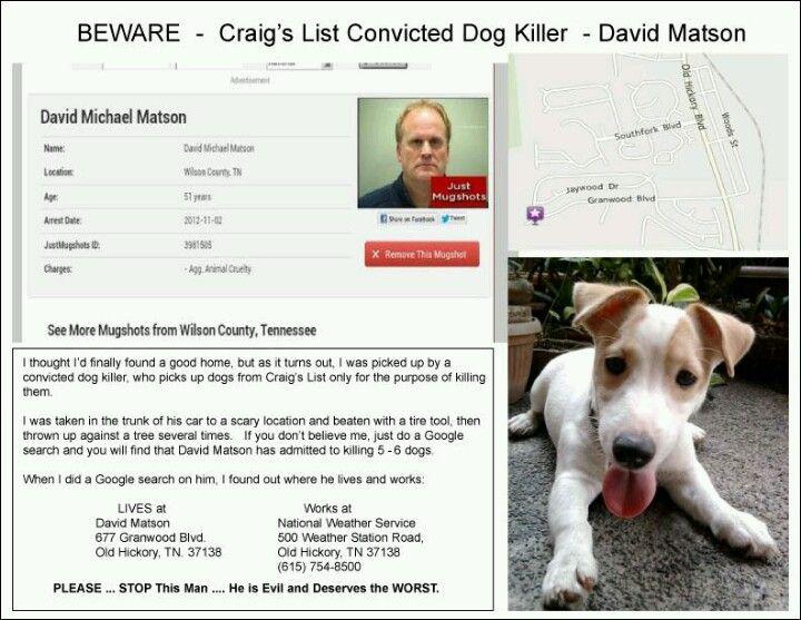 Free animals on craigslist