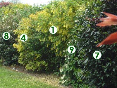 Une haie champêtre très décorative (Scènes de jardins) | JARDIN ...