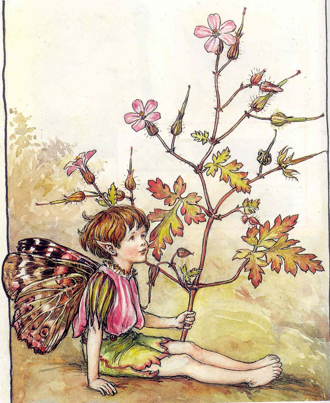 Cicely Mary Barker illustrations, beautiful
