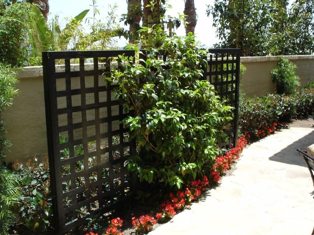Decorative privacy screen front patio ideas pinterest for Privacy screen ideas for backyard