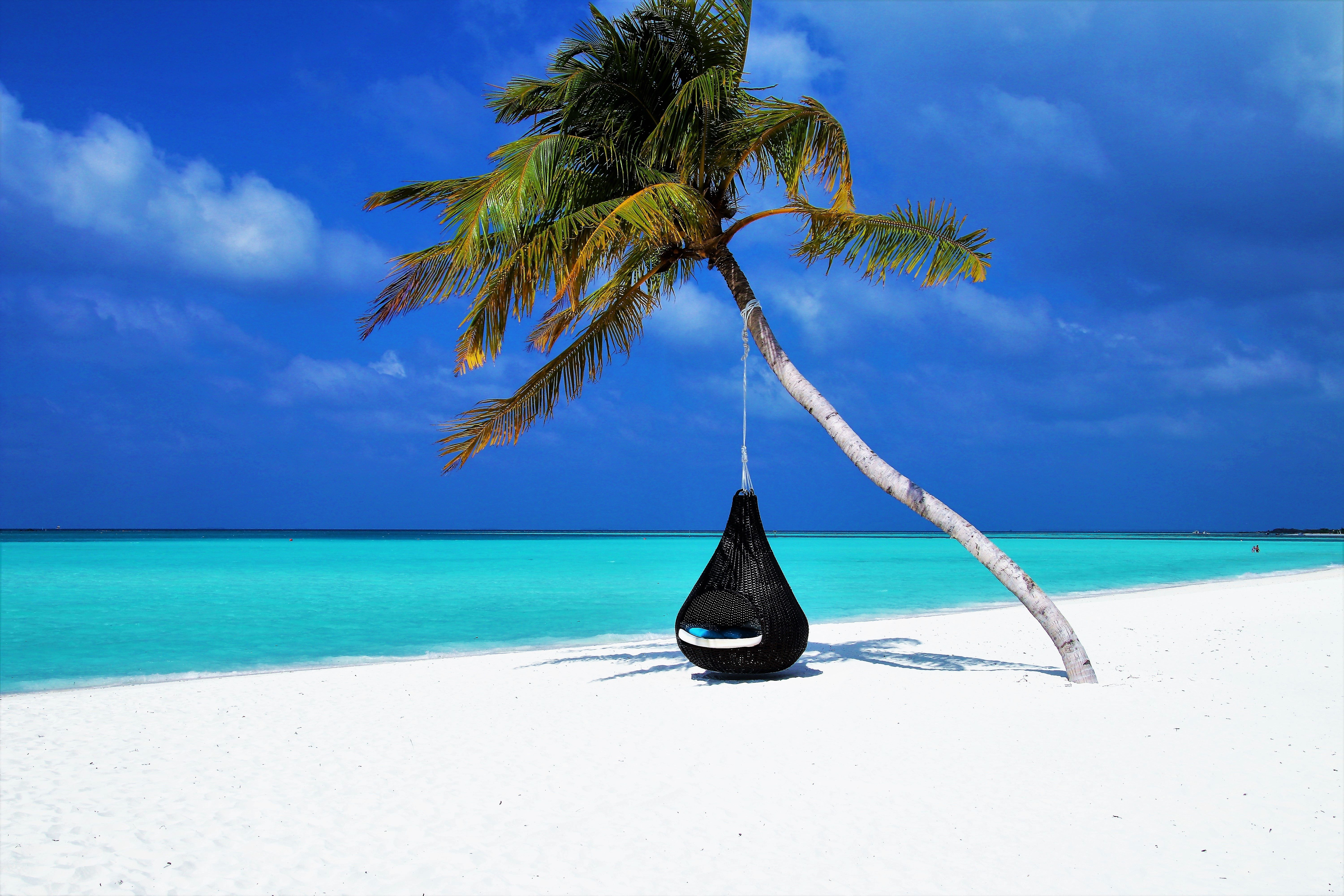 palm tree on beach maldives hd wallpaper adventure tree weather rh pinterest com