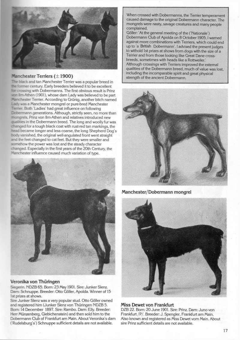 Pin By Jackie Sevalstad On Dogs Dogs Animals