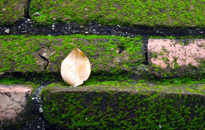 Enlever La Mousse Et Lichen Quel Anti Mousse Naturel Tout Pratique Anti Mousse Naturel Mousse Nettoyage Naturel