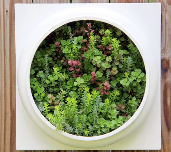 Miniature Forest Wall Planters Indoor Wall Planter Living Wall Planter