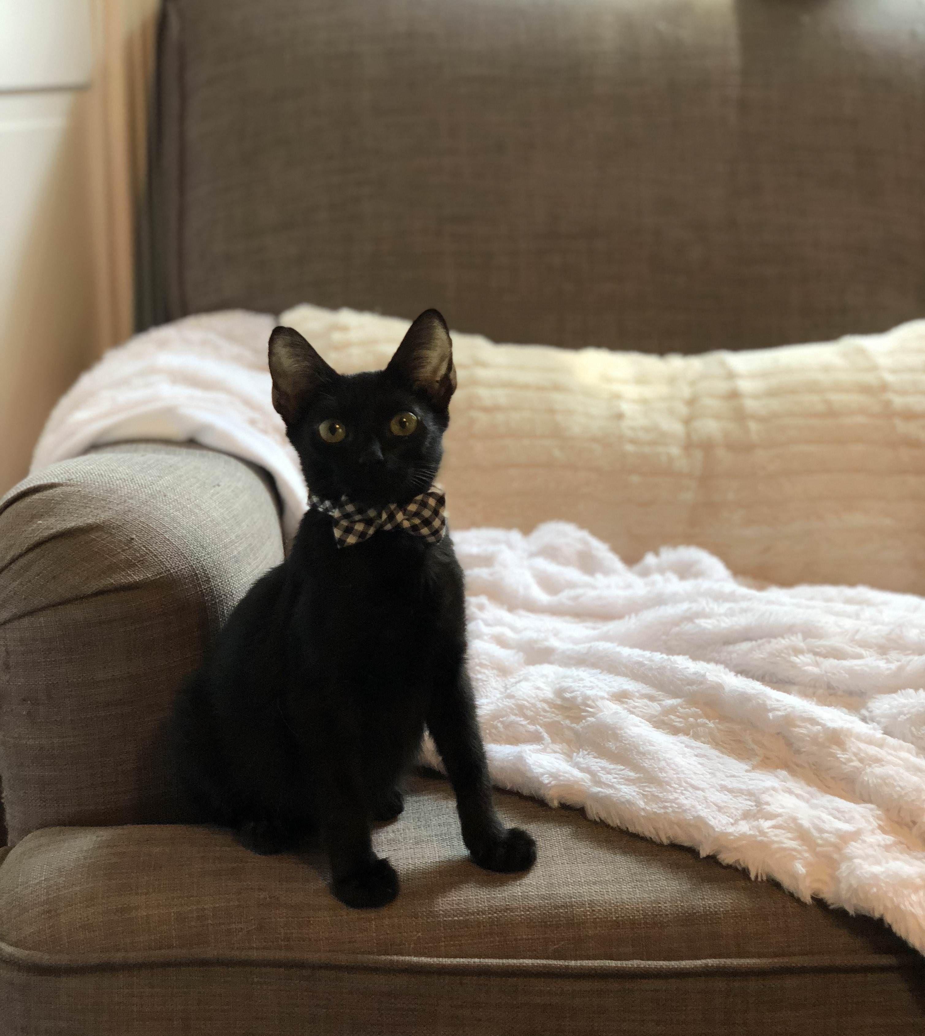 My Foster Kitten Boo Hes A Good Boy Foster Kittens Kitten Cats