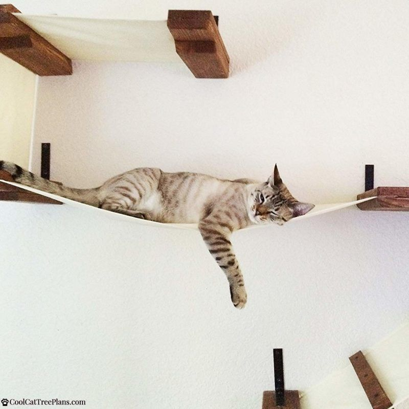 The Best Cat Wall Shelves Of 2020 And Why You Need Them Cat