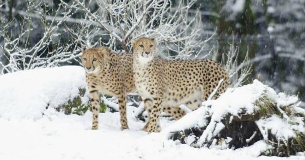 The Oregon Zoo Has Been Getting a Ton of Snow and Their Animals Are Having the Best Time