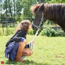 communiefoto paarden - Google zoeken