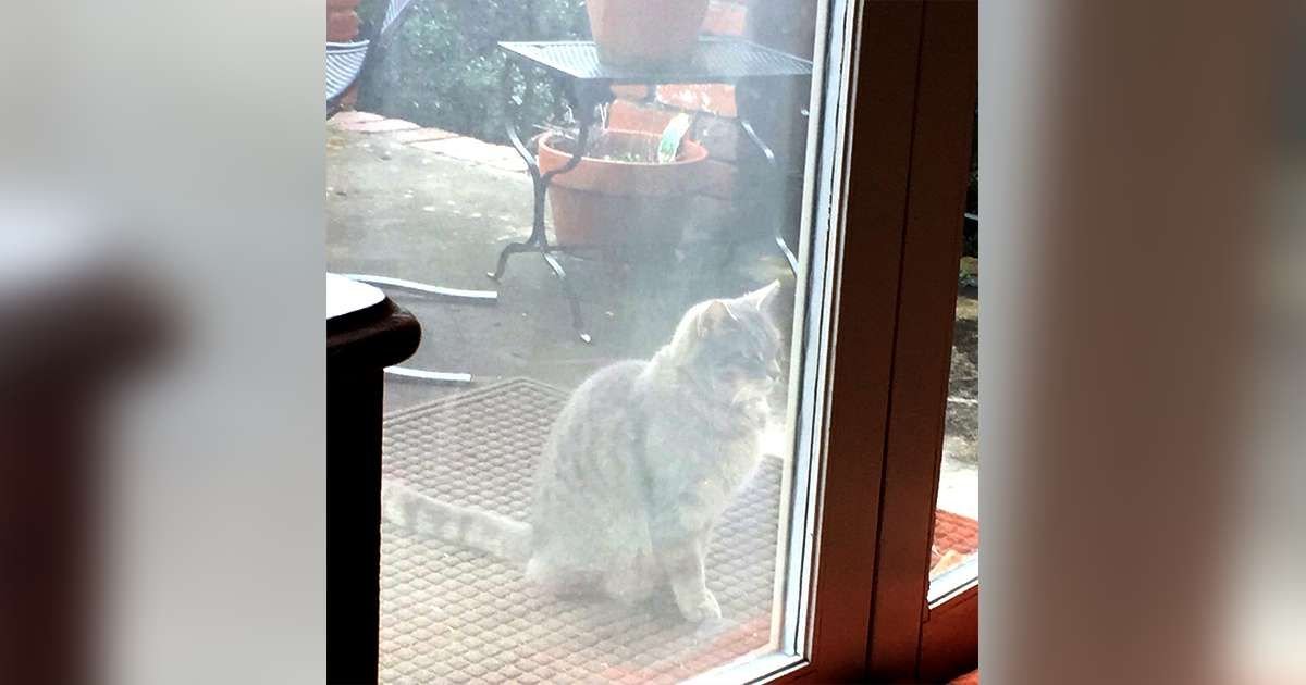 Neighbor Cat Visits Window Every Day Looking For Dog Friend Who Passed Away Animal Shelters Near Me Dog Friends Cats