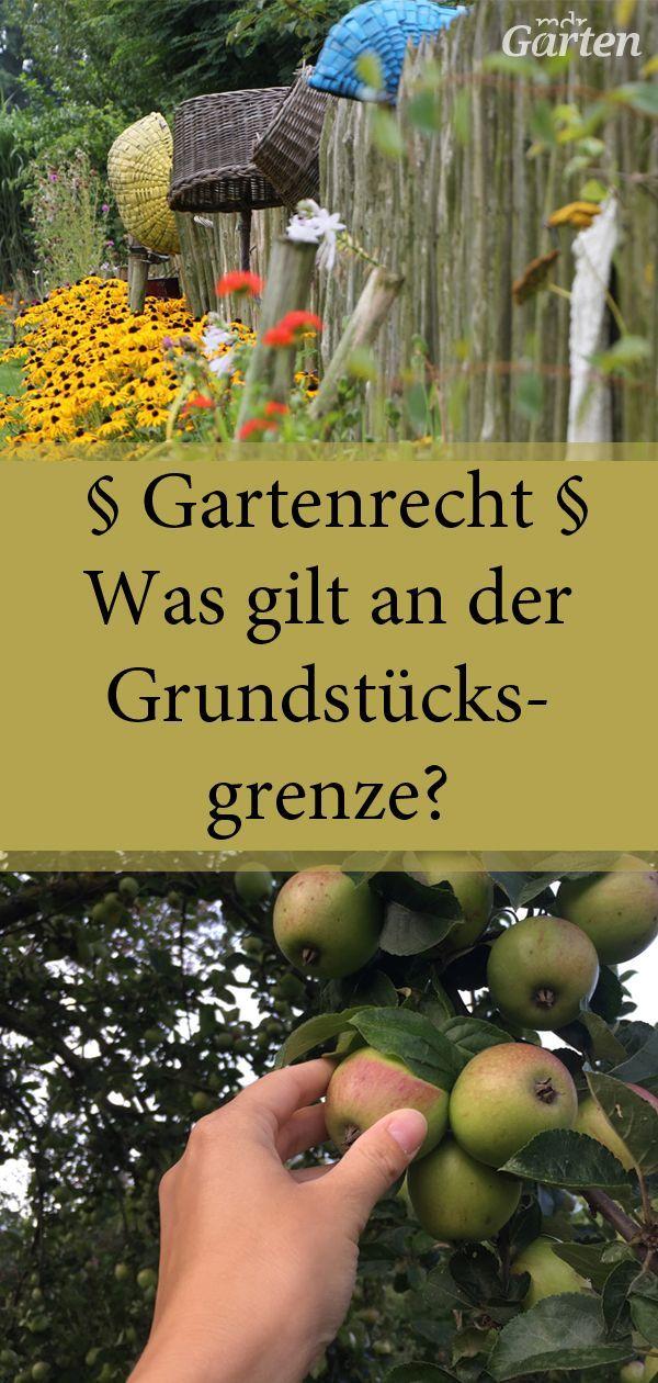 Rechtliche Fragen Rund Um Den Garten Garten Zaun Ideen Bepflanzung Sichtschutz Garten Ideen Gunstig