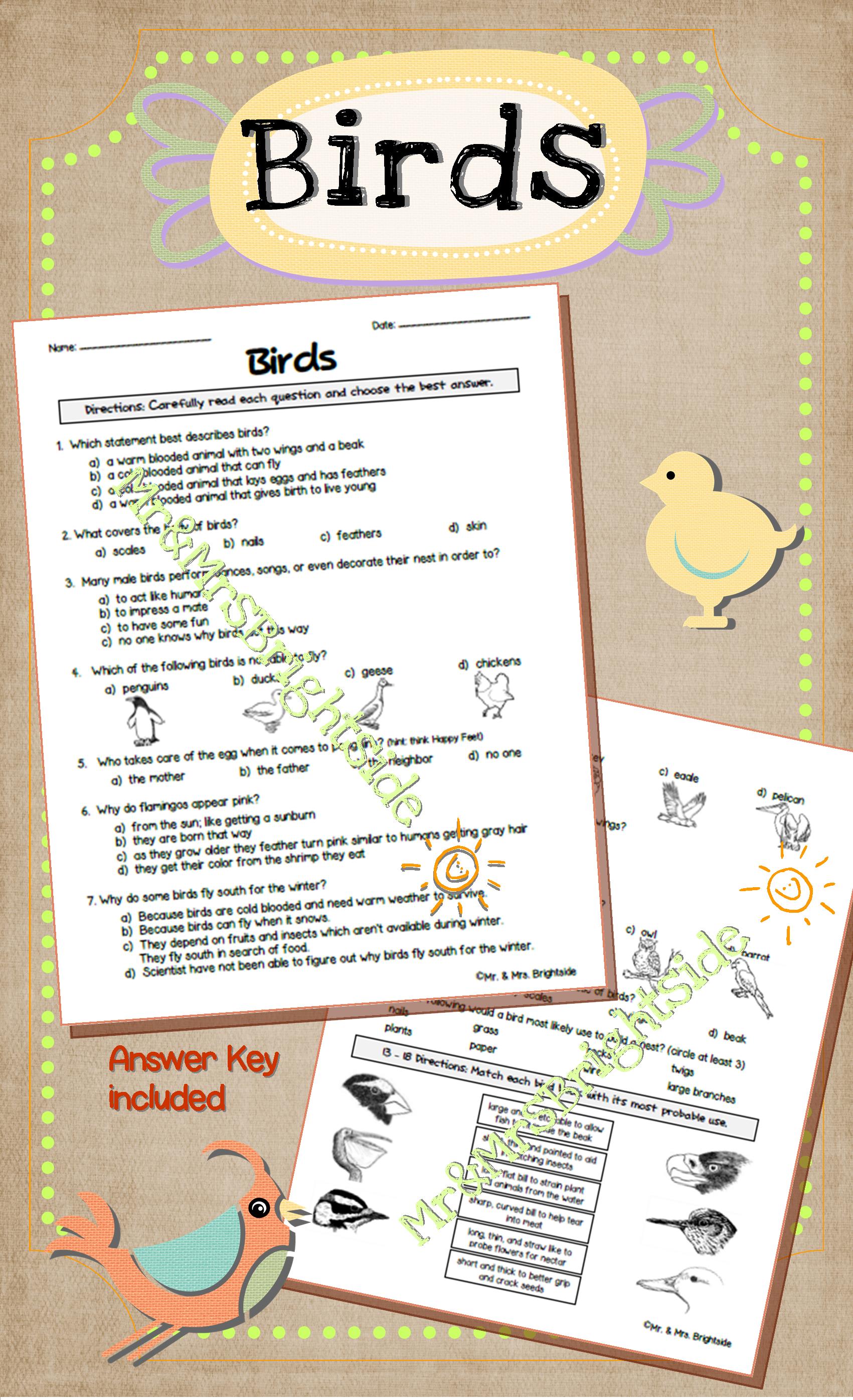 Understanding Animals Birds