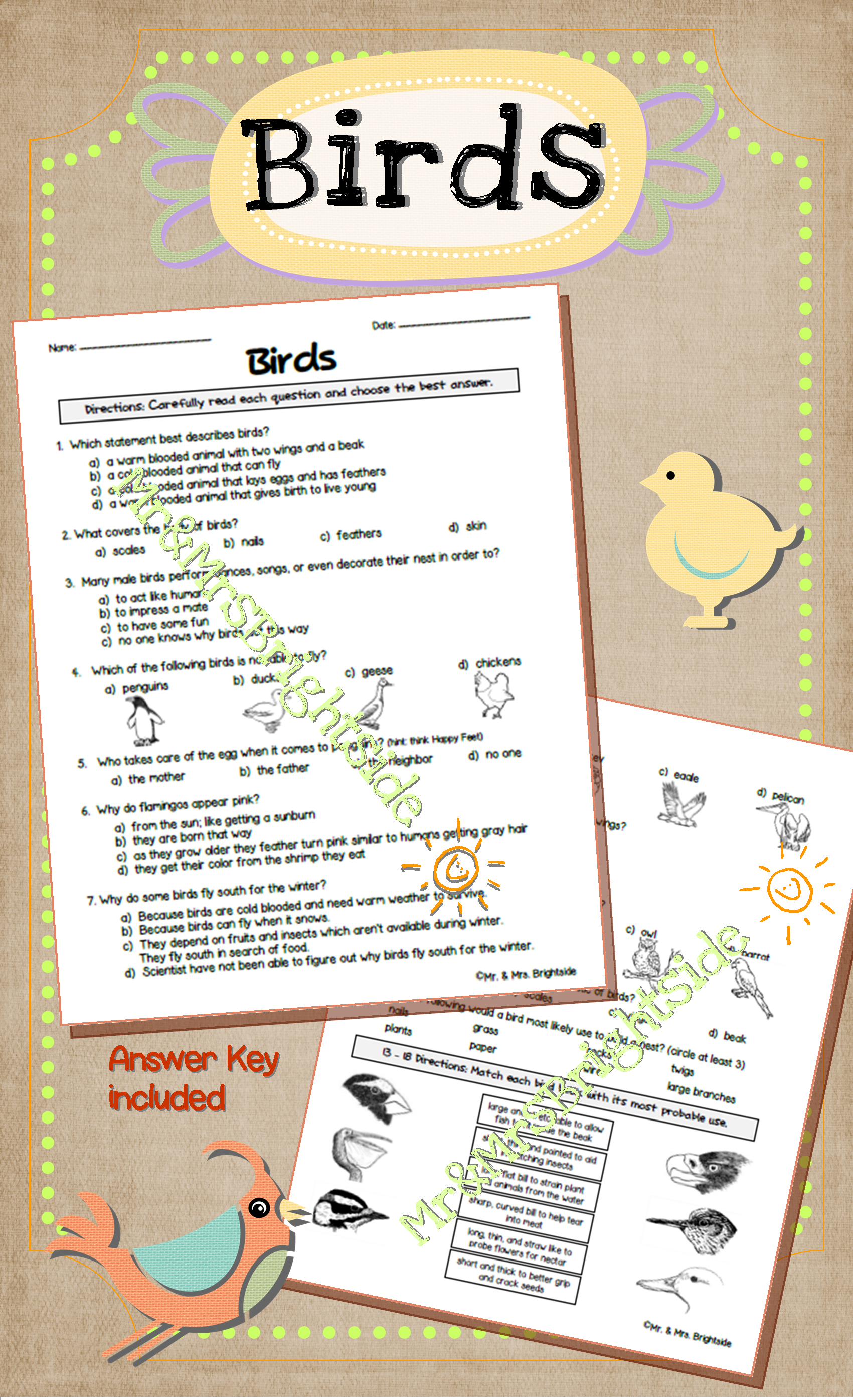 Understanding Animals: Birds | Pinterest | Worksheets, Creative ...