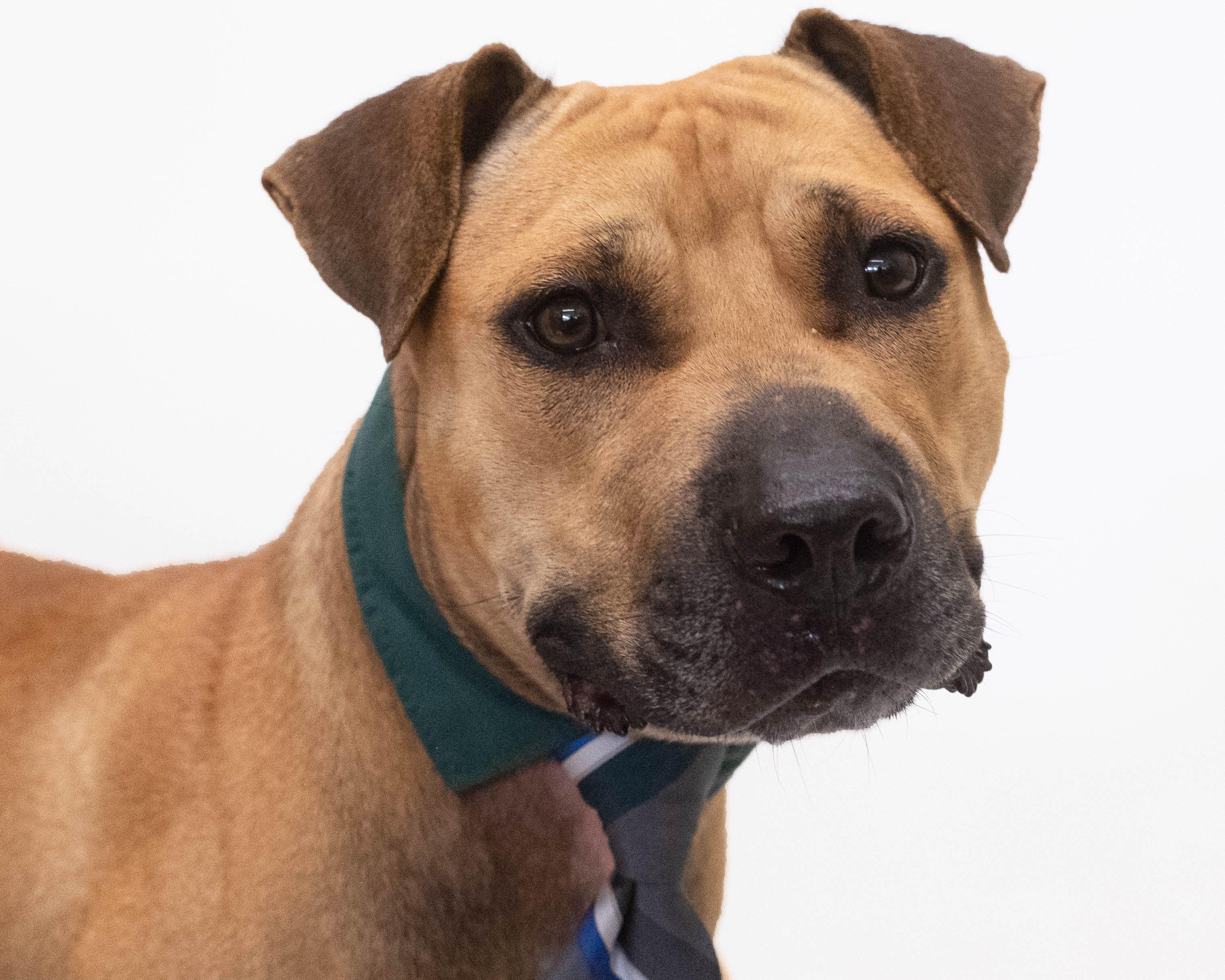 Adoptable Dogs Animal Shelter Dog Adoption Animals