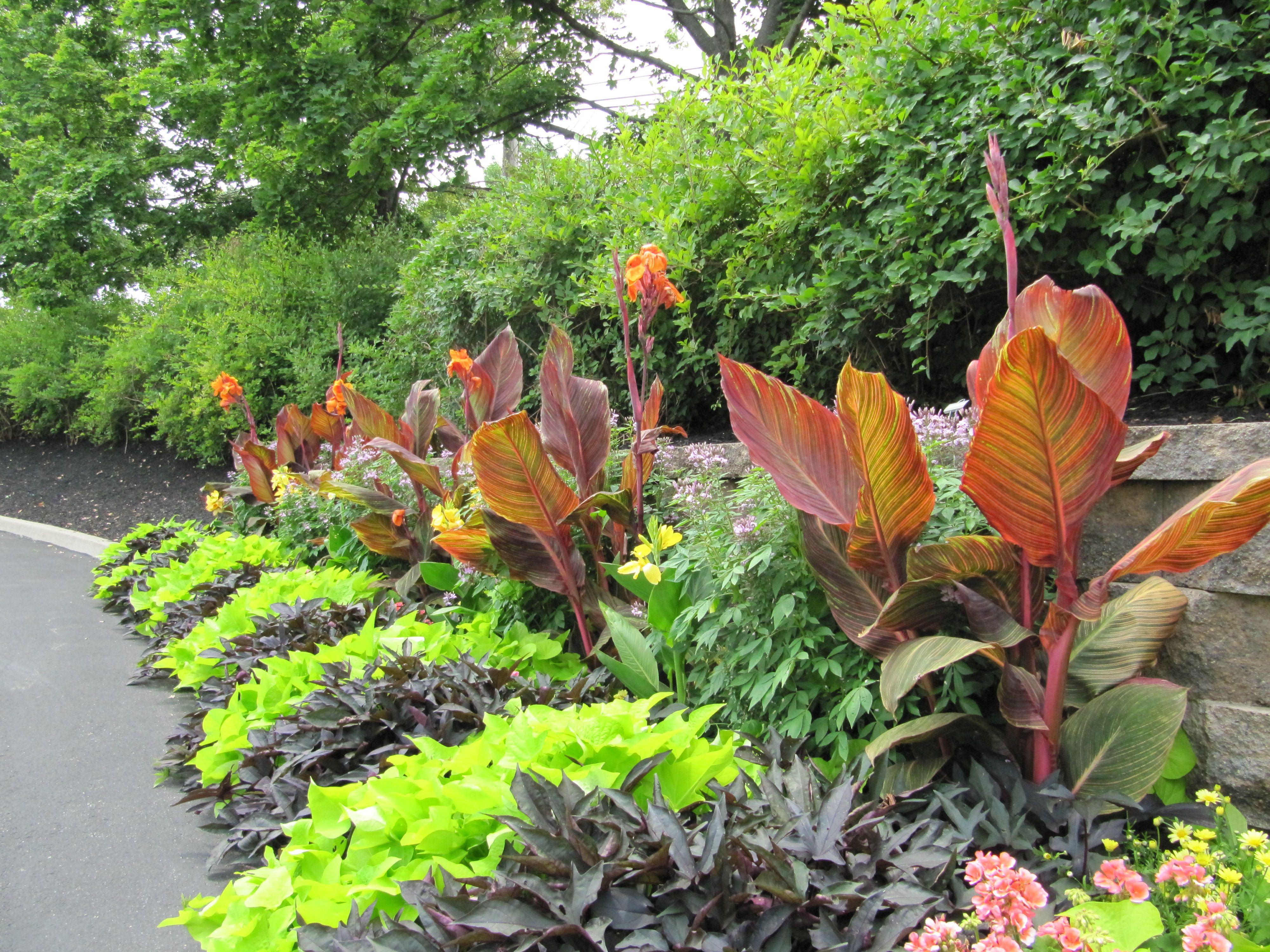 Lovable Tropical Garden Ideas Adelaide and tropical garden ...