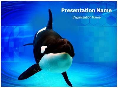 orca powerpoint template is one of the best powerpoint templates, Modern powerpoint
