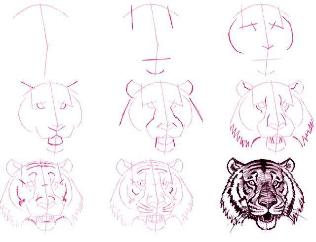 Comment Dessiner La Tête D Un Tigre 3207 Animaux Drawings