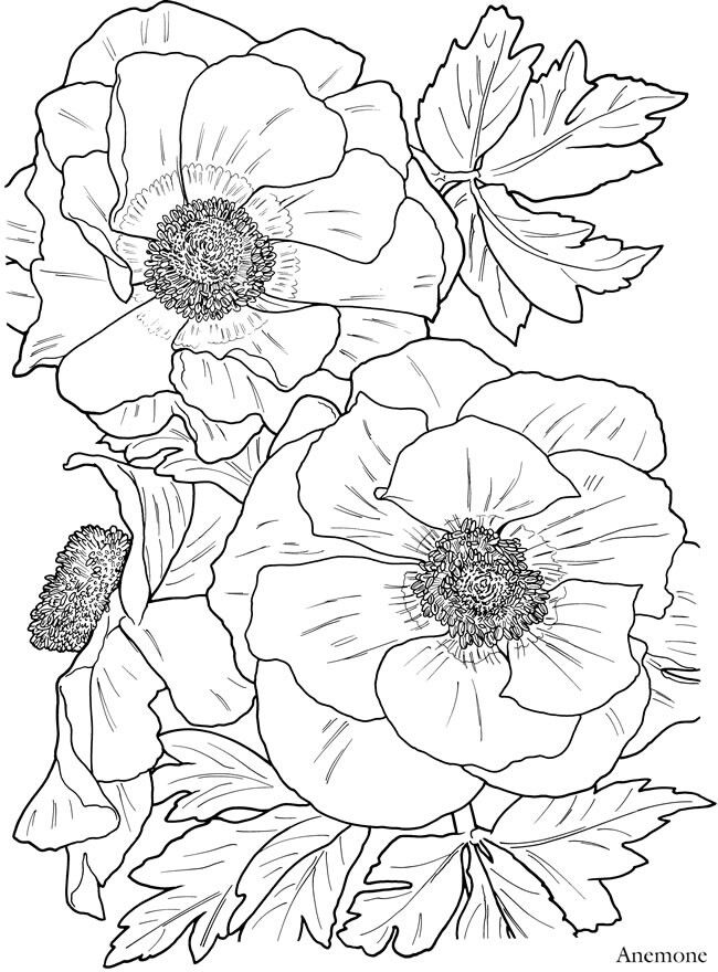 Dover Publications Anemone Flower Flower Coloring Pages Flower Drawing Coloring Pages