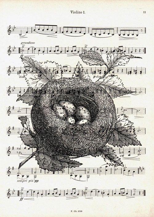 sheet-music-pen-and-ink-drawing-etching-nest-etsy-art-nursery-finnians-moon-interiors.jpg (500×701)