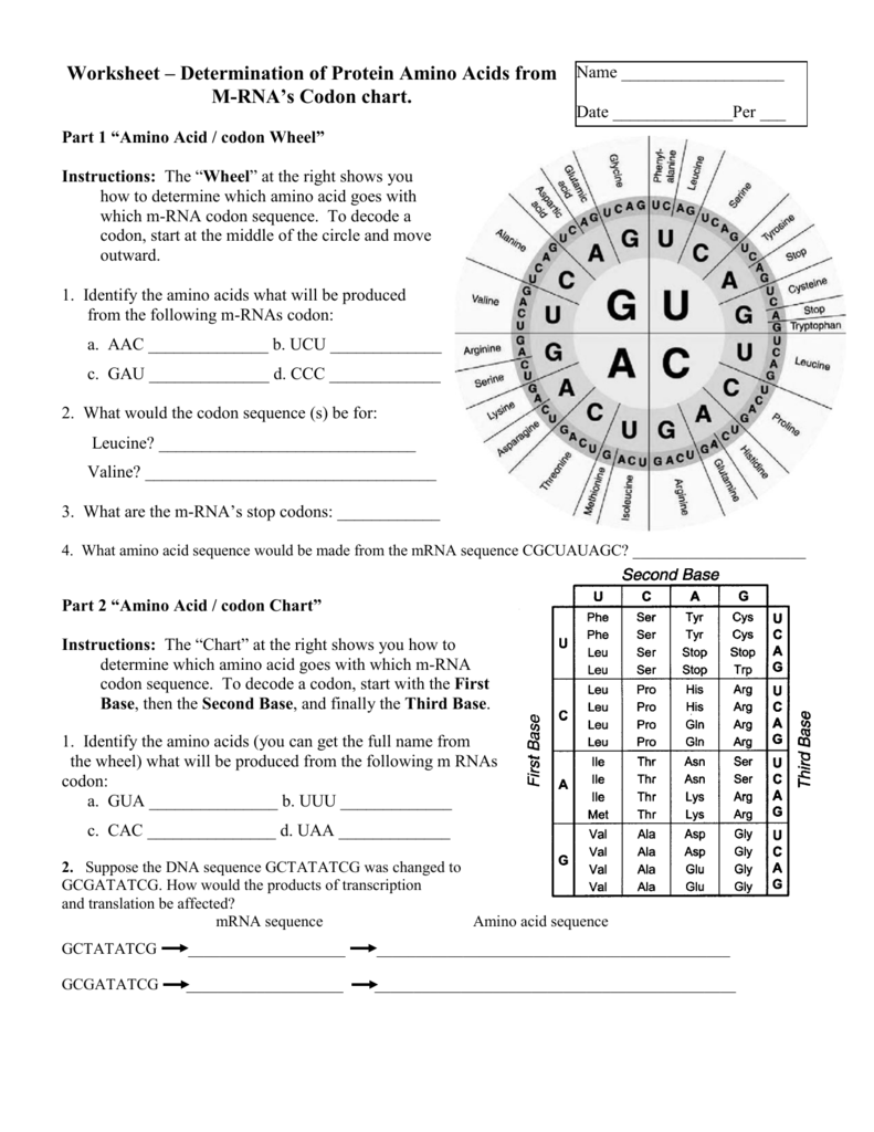 Worksheet – Determination of Protein Amino Acids from M | DNA and ...