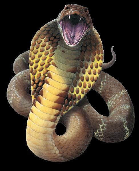 Cobra Snake Png File Png Mart King Cobra Snake Cobra Snake Cobra Tattoo