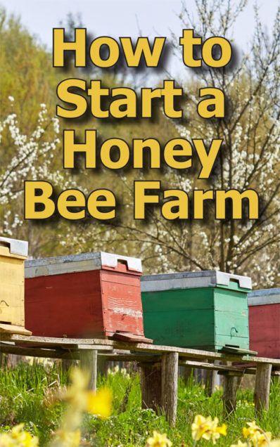 How to Start Beekeeping in Your Backyard | Honey bee ...