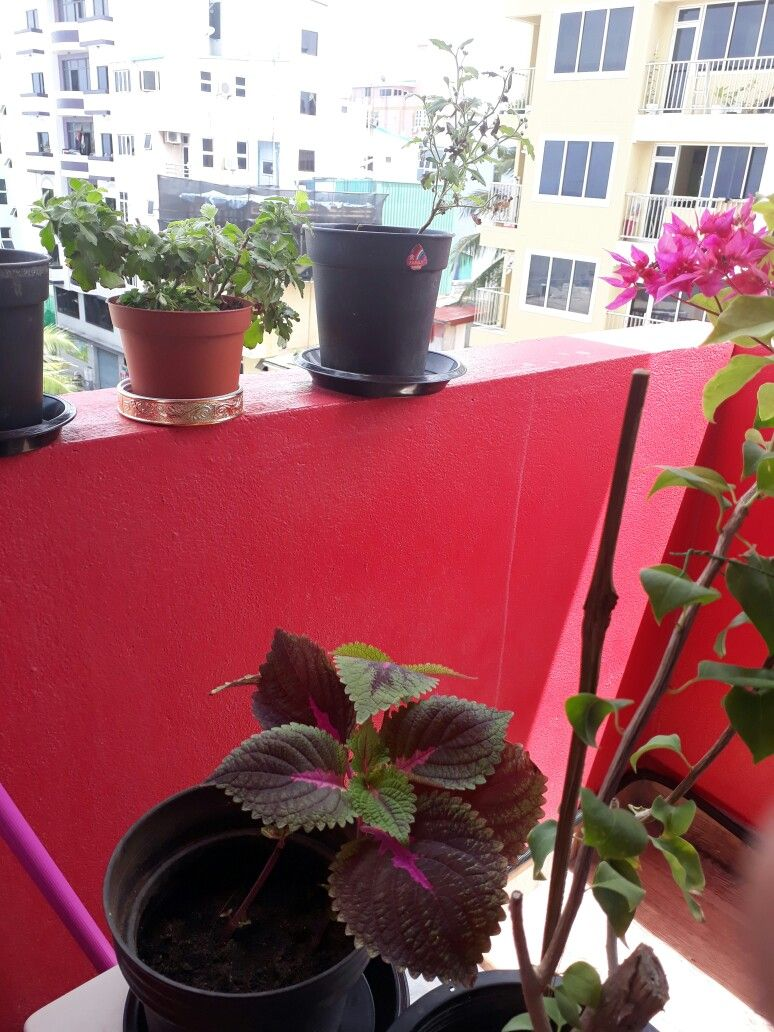my lil garden