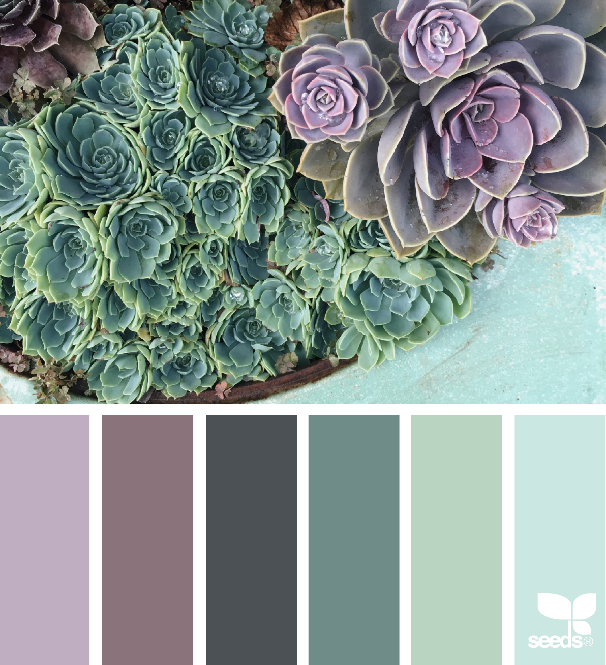 Colors that go well with green and purple - Purple Color Palette Green Succulent Garden Relax Peaceful Mood Board