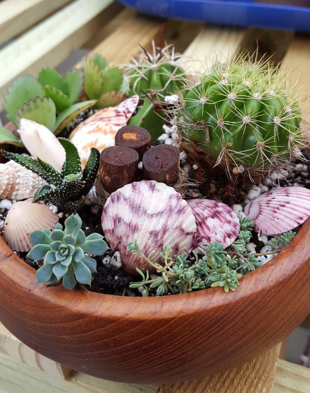 Succulent & Cacti Arrangement With Seashells and Driftwood in Oval Vintage  Teak Wood Bowl Succulent Planter