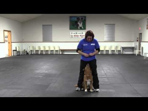 Teach Your Dog To Heel Between Your Legs Http Www 7tv Net