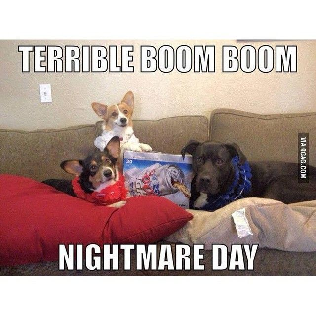 Happy 4th of July. Well not a happy day for your dogs though #9gag